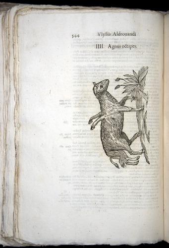 Image of Aldrovandi-1570-0544