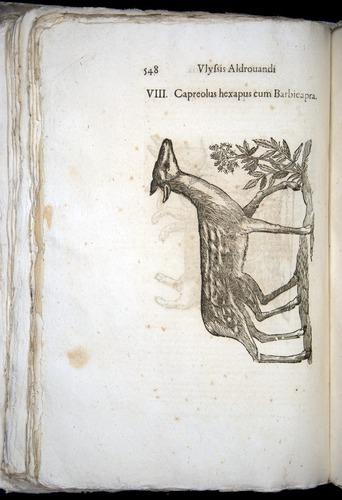 Image of Aldrovandi-1570-0548