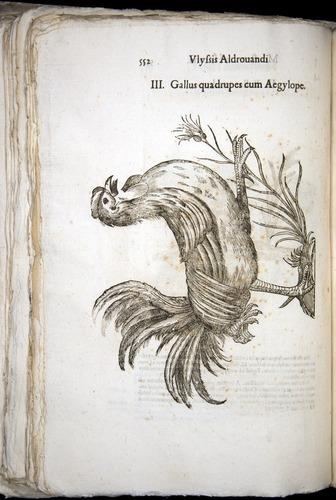 Image of Aldrovandi-1570-0552