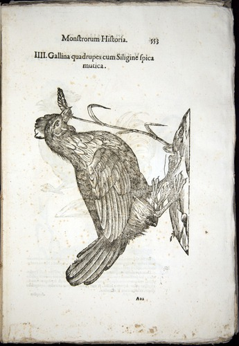 Image of Aldrovandi-1570-0553