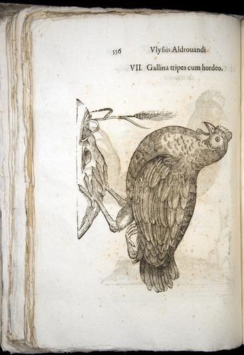 Image of Aldrovandi-1570-0556