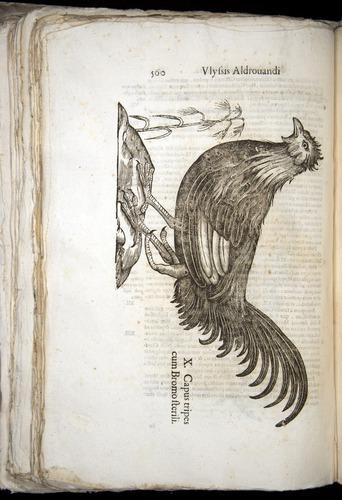 Image of Aldrovandi-1570-0560