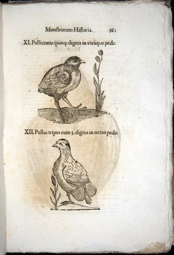 Image of Aldrovandi-1570-0561
