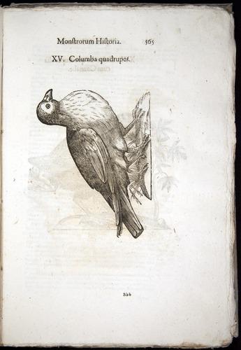 Image of Aldrovandi-1570-0565