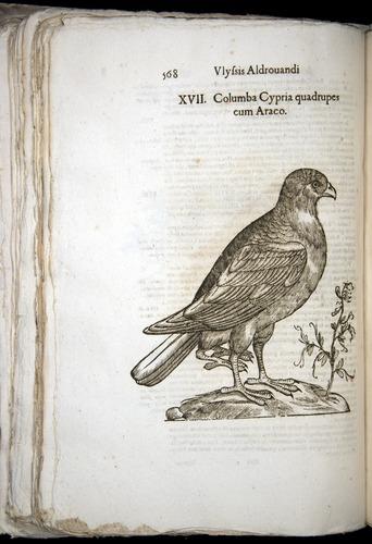 Image of Aldrovandi-1570-0568