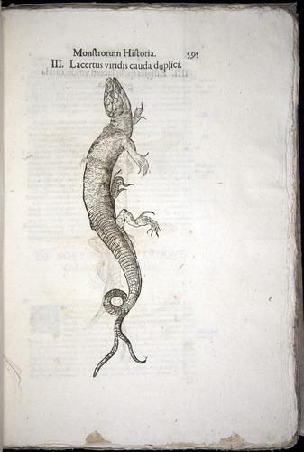 Image of Aldrovandi-1570-0595