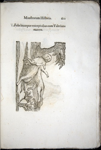 Image of Aldrovandi-1570-0621