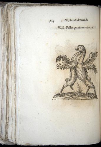 Image of Aldrovandi-1570-0624