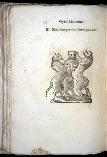 Image of Aldrovandi-1570-0658