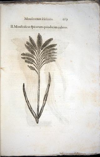 Image of Aldrovandi-1570-0667