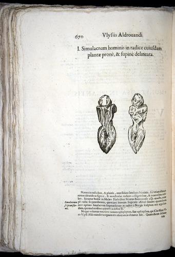 Image of Aldrovandi-1570-0670