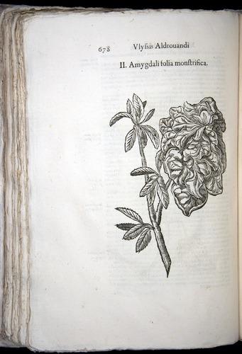 Image of Aldrovandi-1570-0678