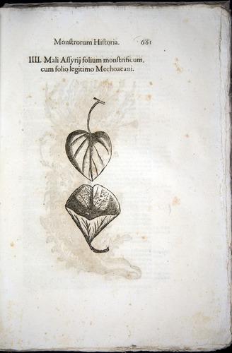 Image of Aldrovandi-1570-0681