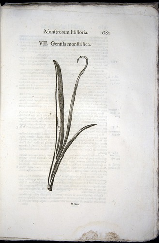Image of Aldrovandi-1570-0685