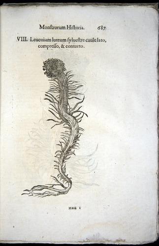 Image of Aldrovandi-1570-0687