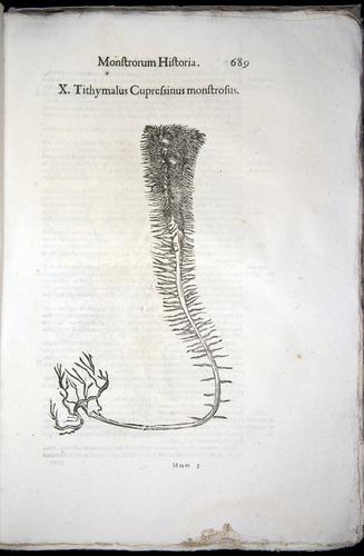Image of Aldrovandi-1570-0689