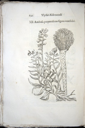 Image of Aldrovandi-1570-0692