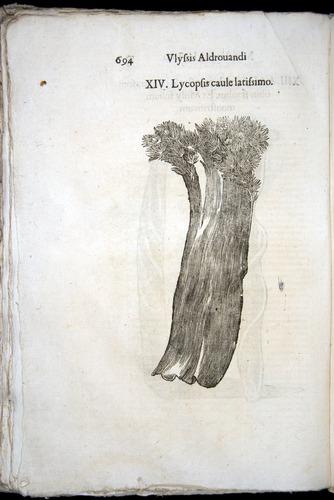 Image of Aldrovandi-1570-0694