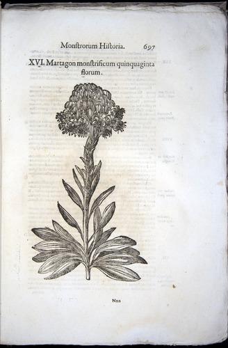 Image of Aldrovandi-1570-0697