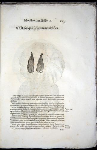 Image of Aldrovandi-1570-0705