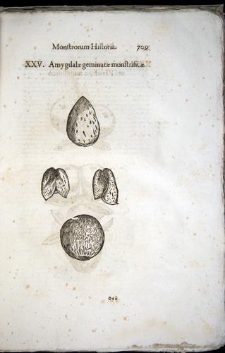 Image of Aldrovandi-1570-0709