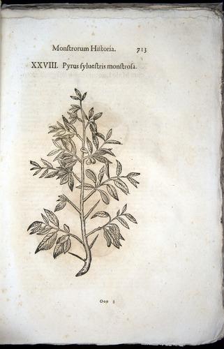 Image of Aldrovandi-1570-0713