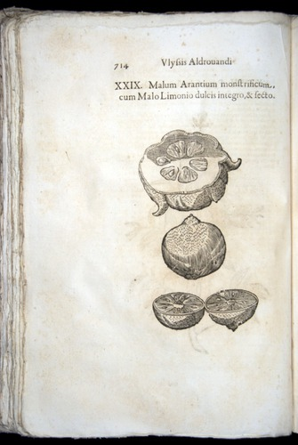 Image of Aldrovandi-1570-0714