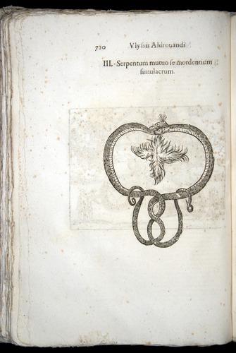 Image of Aldrovandi-1570-0720