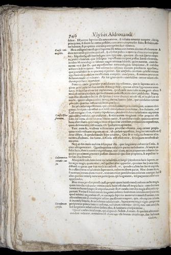 Image of Aldrovandi-1570-0746