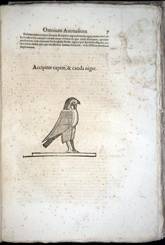 Image of Aldrovandi-1570-z007