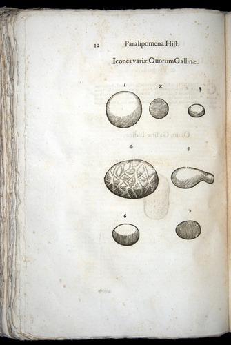 Image of Aldrovandi-1570-z012