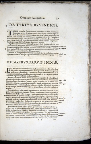 Image of Aldrovandi-1570-z017