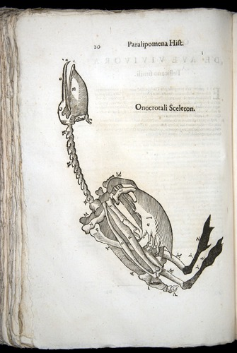 Image of Aldrovandi-1570-z020