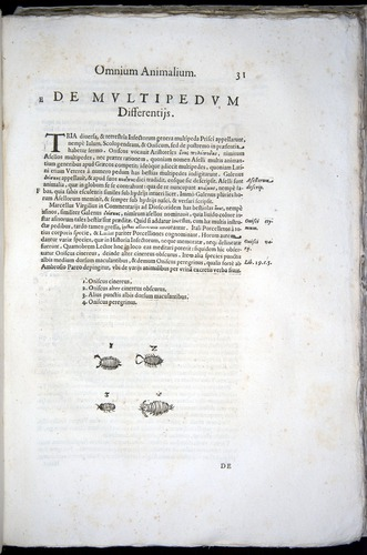 Image of Aldrovandi-1570-z031