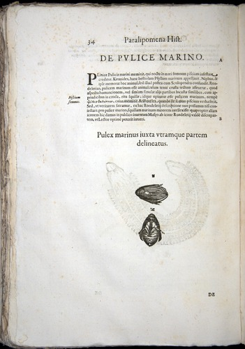 Image of Aldrovandi-1570-z034