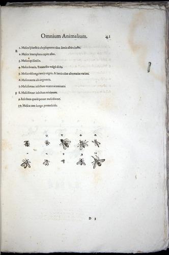 Image of Aldrovandi-1570-z041