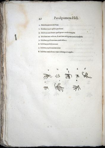 Image of Aldrovandi-1570-z042