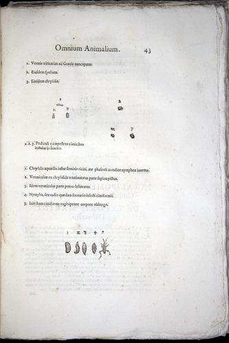 Image of Aldrovandi-1570-z043
