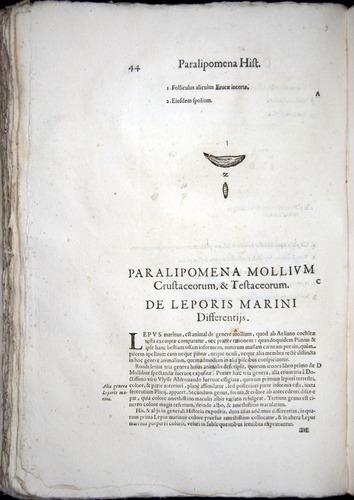 Image of Aldrovandi-1570-z044