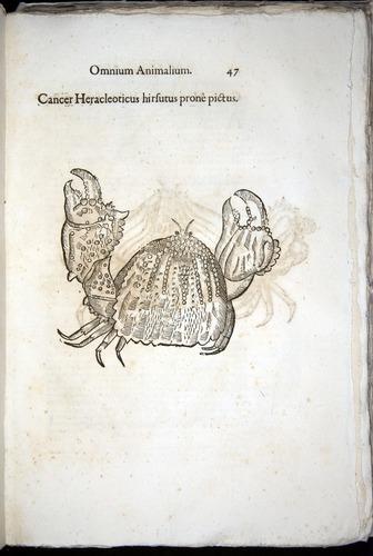 Image of Aldrovandi-1570-z047