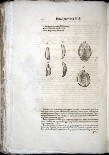 Image of Aldrovandi-1570-z050