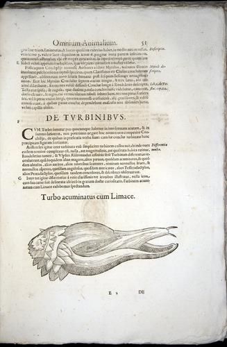 Image of Aldrovandi-1570-z051