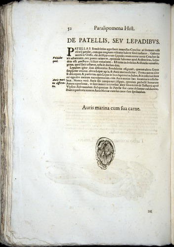 Image of Aldrovandi-1570-z052
