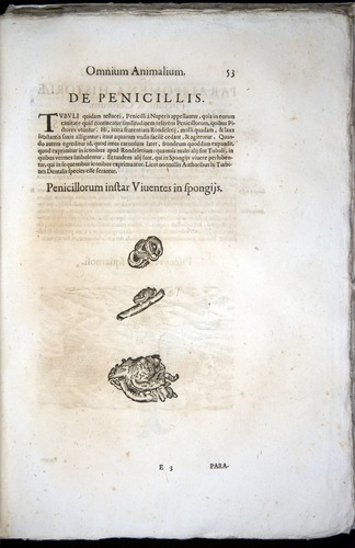 Image of Aldrovandi-1570-z053