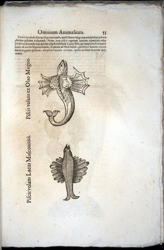 Image of Aldrovandi-1570-z055