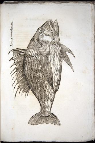 Image of Aldrovandi-1570-z057