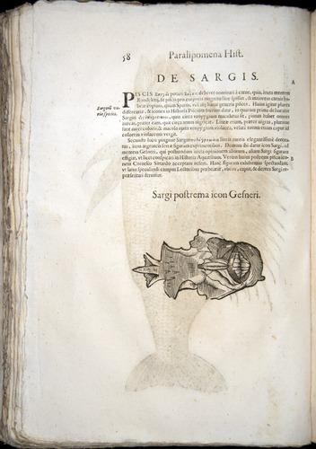 Image of Aldrovandi-1570-z058