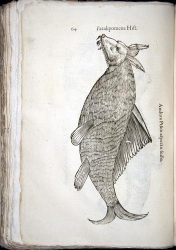 Image of Aldrovandi-1570-z064