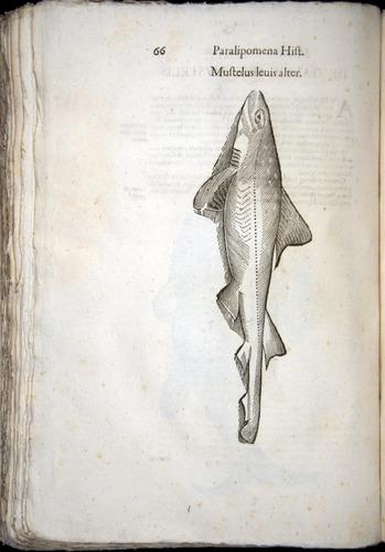 Image of Aldrovandi-1570-z066