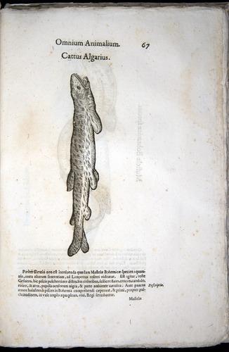 Image of Aldrovandi-1570-z067